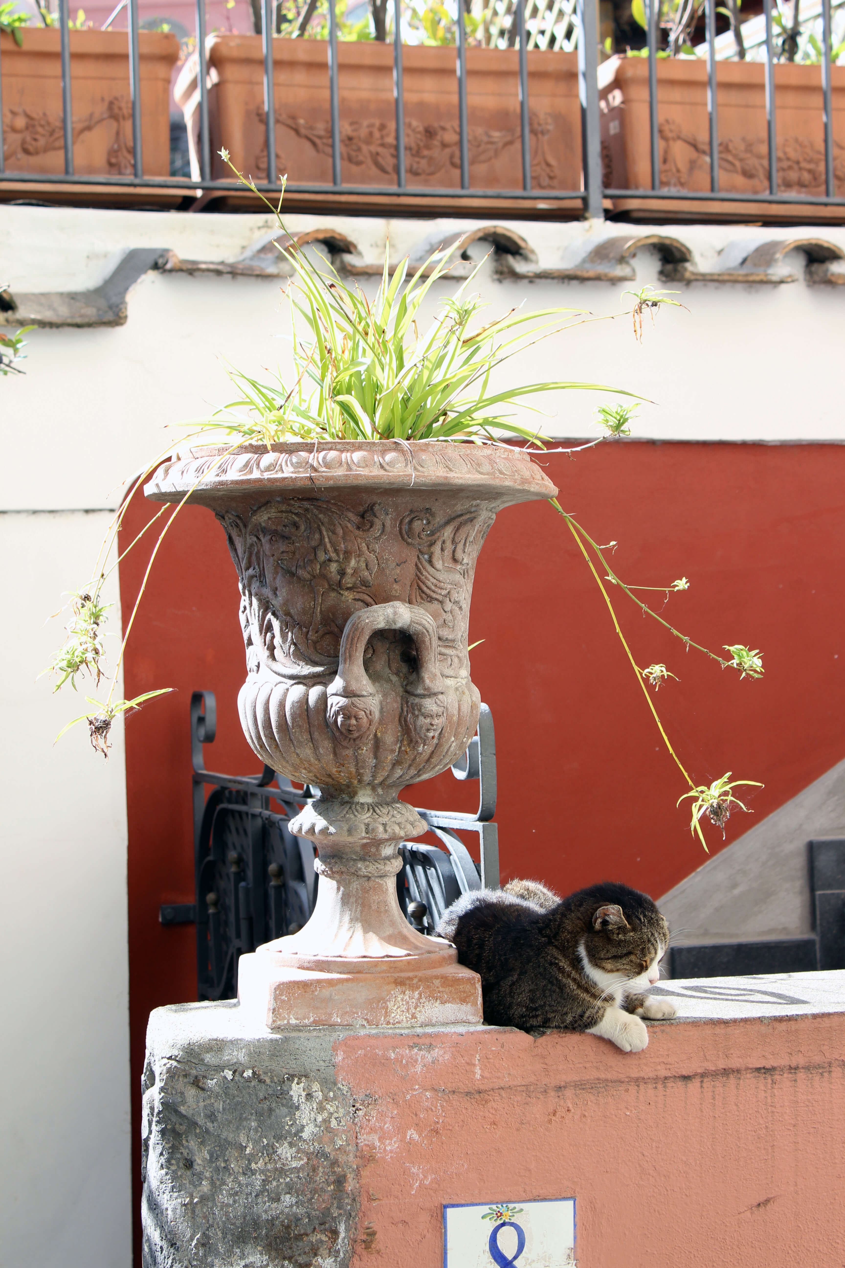 Love Affair with Positano - Cat and Urn