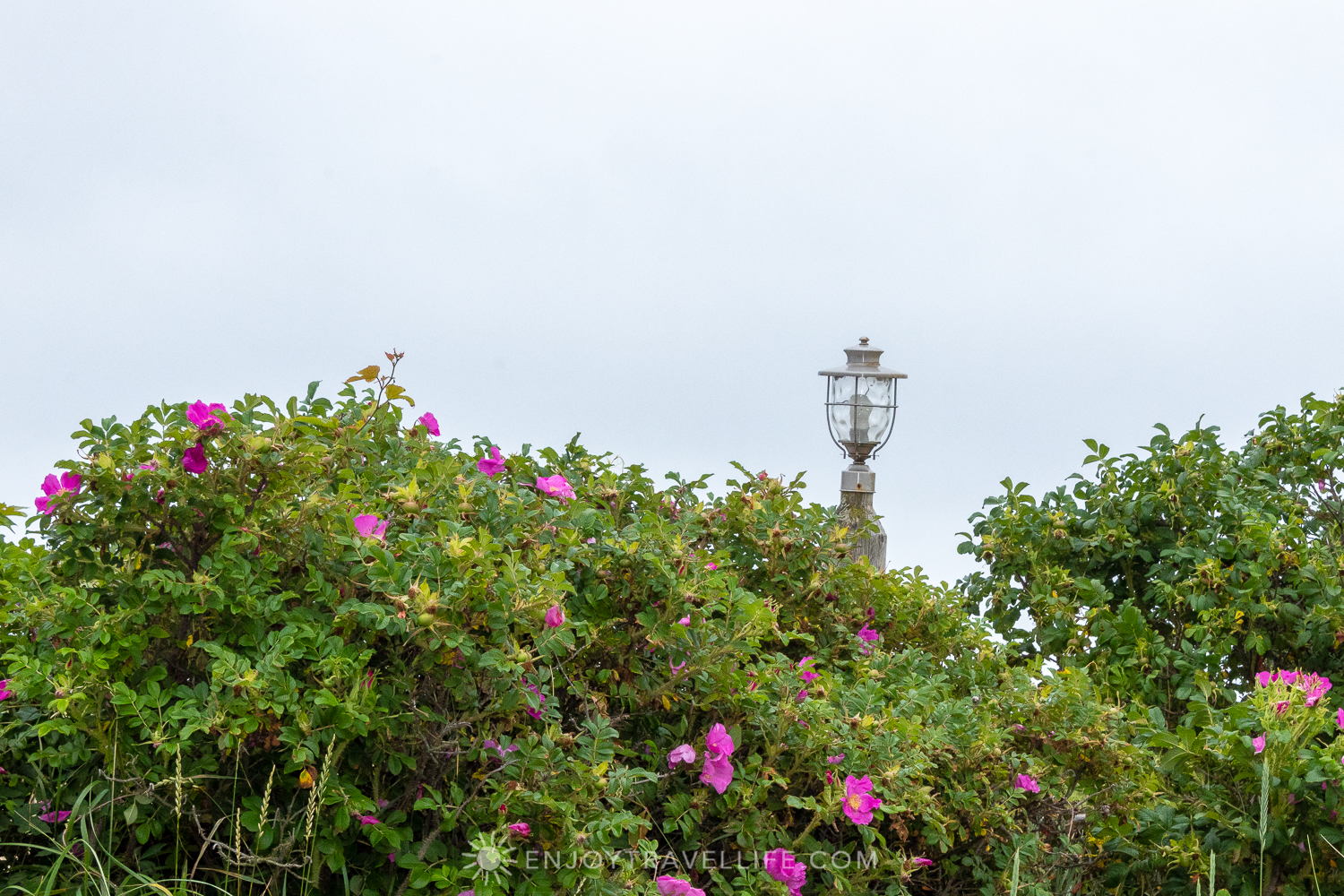 Waterfront Weekend in Chatham - Chatham Tides Inn Beach Roses & Lantern