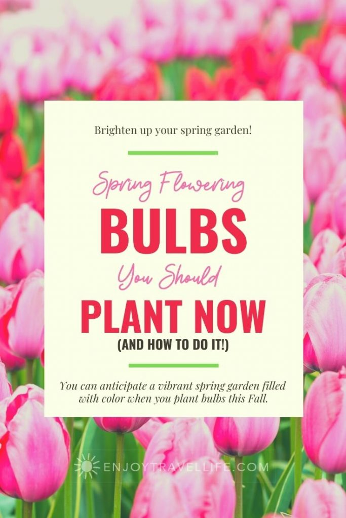 Spring Flowering Bulbs You Should Plant Now - Pinterest Pin