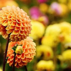 What Are the Best Fall and Winter Plants for the Garden?