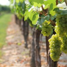 Can You Guess Where You'll Find the Best Wineries in New England?