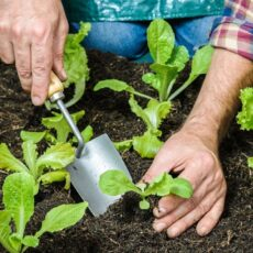 The Most Common Spring Gardening Mistakes And How to Easily Avoid Them