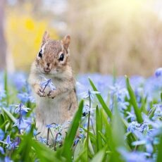 How to Attract Wildlife to Your Yard   10 Easy & Nature-Friendly Ideas